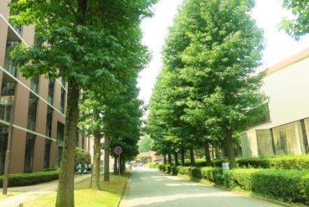新潟の大学・専門学校でストリートビューが活用されている学校紹介