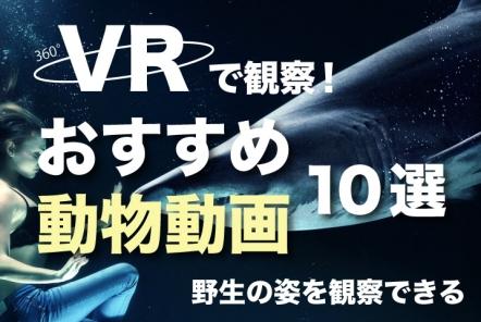 VRで観察!おすすめ動物動画10選【野生の姿を観察できる】