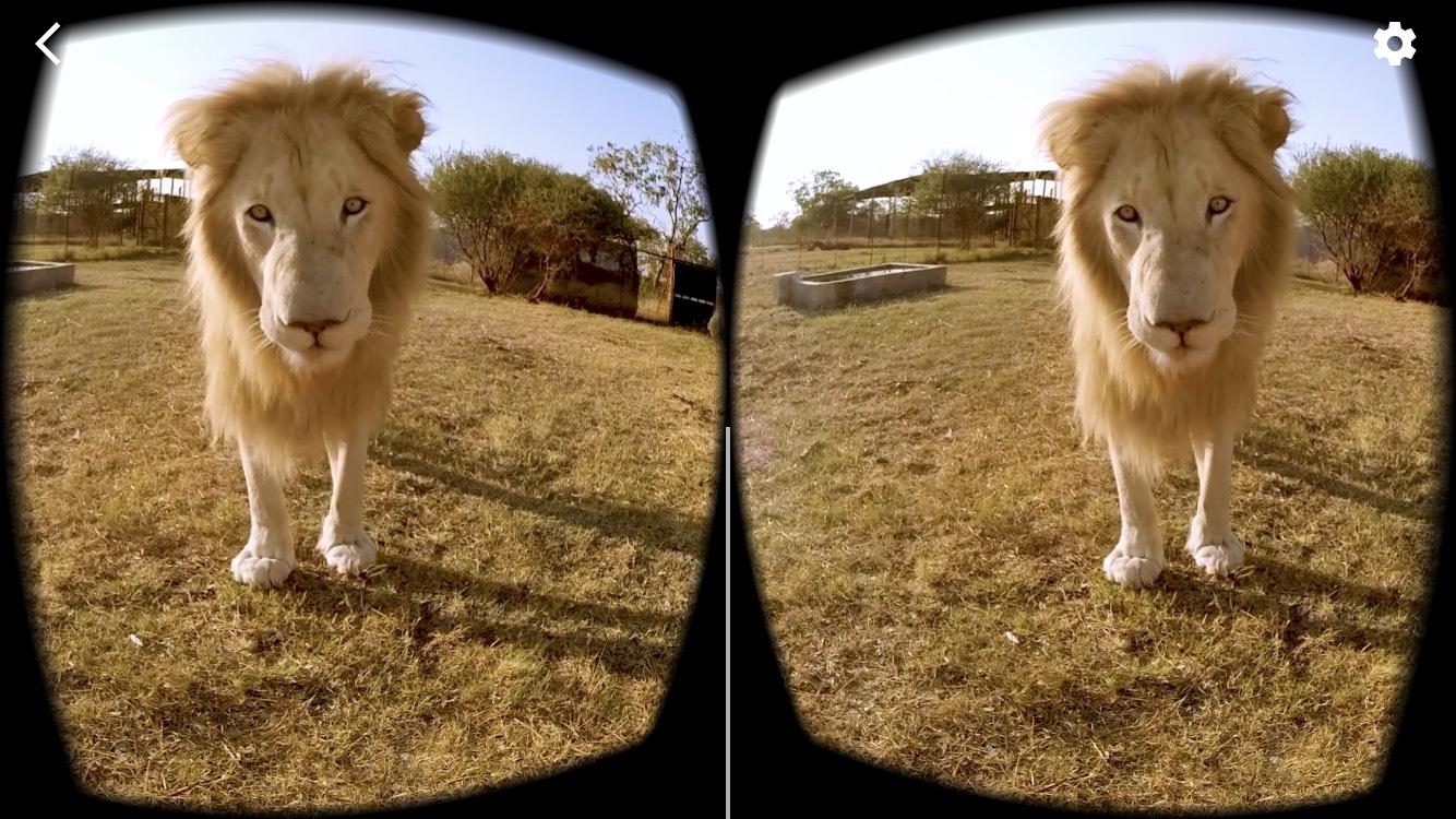 ライオン2眼画面