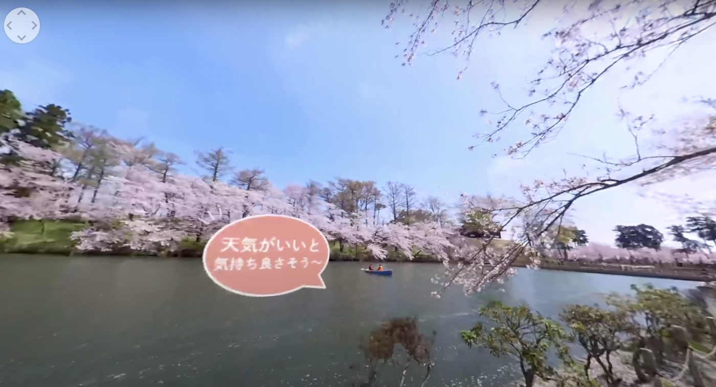 高田の桜VR映像2
