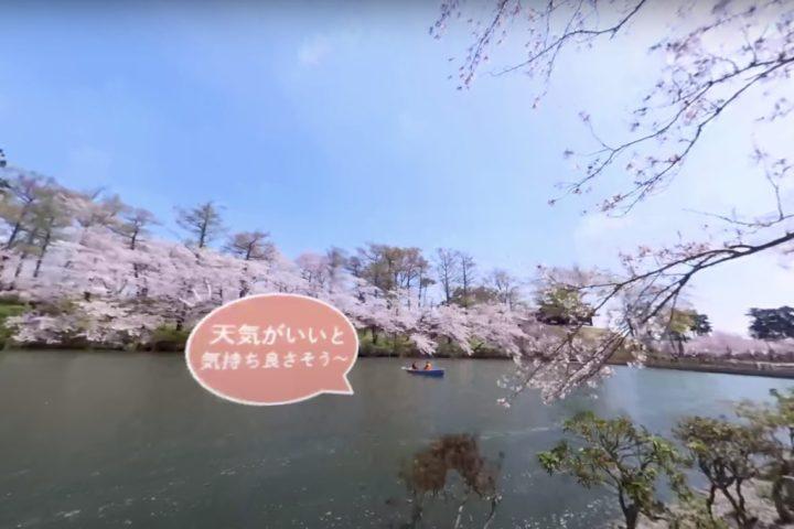 新潟日報に「高田城址公園」のバーチャルお花見をご紹介いただきました