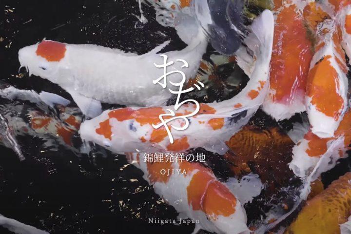 小千谷市観光プロモーション動画